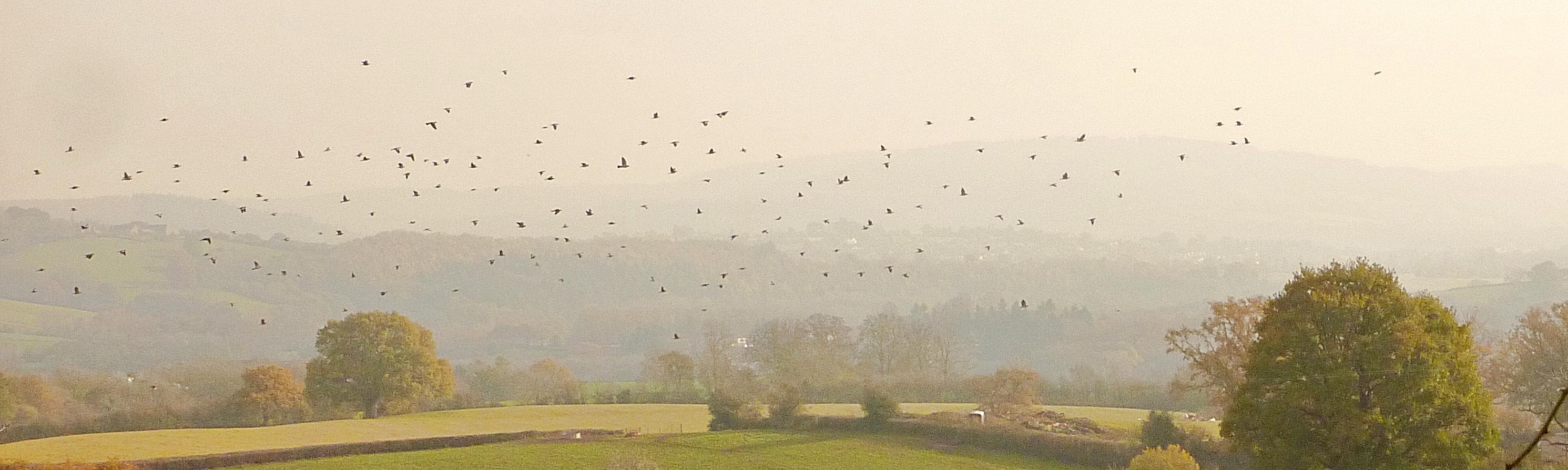 Dharma pigeons Five